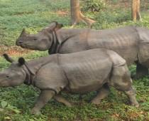 Chitwan National park tours-7night-8days
