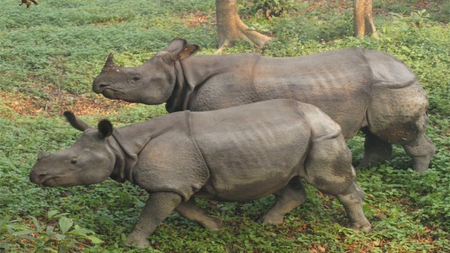 Chitwan National park tours-7night-8days