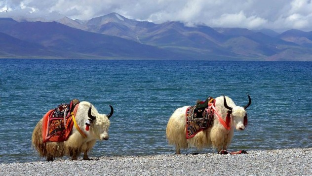 7night/8 days Tibet tours