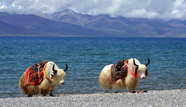 Tibet tours/ 7 Night/8 days out of Nepal tours.