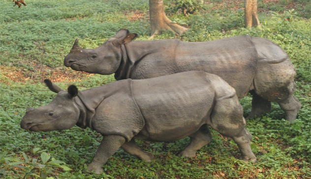 Chitwan National Park Tour 7 Nights – 8 Days