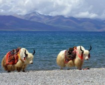 Tibet tours/ 7 Night/8 days