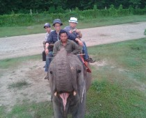 Kathmadu Chitwan National Park and Nogarkot Tours-8 Days