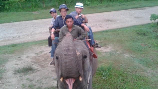 Kathmadu Chitwan National Park and Nogarkot Tours-8 Days
